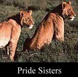 Pride Sisters