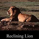 Reclining Lion