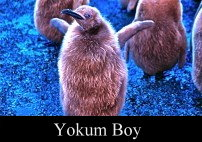 Yokum Boy