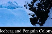 Iceberg and Penguin Colony